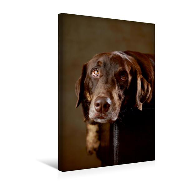 Premium Textil-Leinwand 30 cm x 45 cm hoch, Simba - Labrador x Rottweiler-Mix, 4 Jahre | Wandbild, Bild auf Keilrahmen, Fertigbild auf echter Leinwand, Leinwanddruck - Coverbild