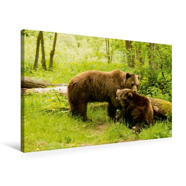 Premium Textil-Leinwand 75 cm x 50 cm quer, Bären-Treff zur Paarungszeit | Wandbild, Bild auf Keilrahmen, Fertigbild auf echter Leinwand, Leinwanddruck - Coverbild