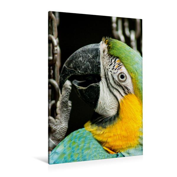 Premium Textil-Leinwand 80 cm x 120 cm  hoch, Spieler | Wandbild, Bild auf Keilrahmen, Fertigbild auf echter Leinwand, Leinwanddruck - Coverbild