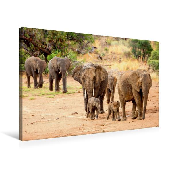 Premium Textil-Leinwand 75 cm x 50 cm quer, Elefanten   Wandbild, Bild auf Keilrahmen, Fertigbild auf echter Leinwand, Leinwanddruck - Coverbild