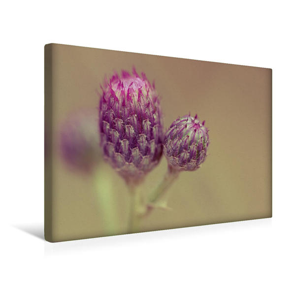 Premium Textil-Leinwand 45 cm x 30 cm quer, Ein Motiv aus dem Kalender Magische Blüten | Wandbild, Bild auf Keilrahmen, Fertigbild auf echter Leinwand, Leinwanddruck - Coverbild