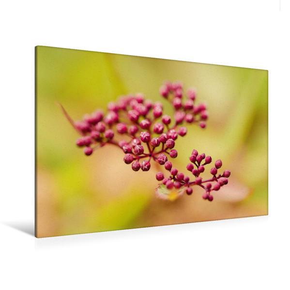 Premium Textil-Leinwand 120 cm x 80 cm quer, Ein Motiv aus dem Kalender Magische Blüten | Wandbild, Bild auf Keilrahmen, Fertigbild auf echter Leinwand, Leinwanddruck - Coverbild