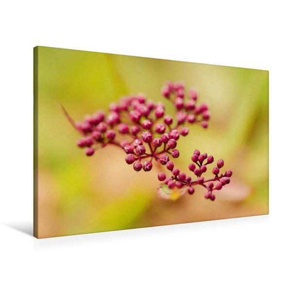 Premium Textil-Leinwand 90 cm x 60 cm quer, Ein Motiv aus dem Kalender Magische Blüten | Wandbild, Bild auf Keilrahmen, Fertigbild auf echter Leinwand, Leinwanddruck - Coverbild