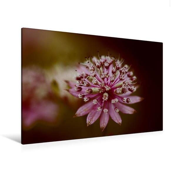 Premium Textil-Leinwand 120 cm x 80 cm quer, Ein Motiv aus dem Kalender Magische Blüten   Wandbild, Bild auf Keilrahmen, Fertigbild auf echter Leinwand, Leinwanddruck - Coverbild