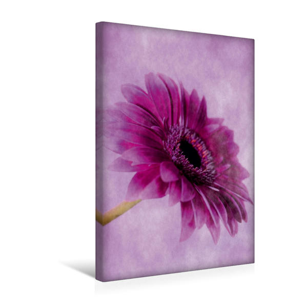 Premium Textil-Leinwand 30 cm x 45 cm hoch, Gerbera | Wandbild, Bild auf Keilrahmen, Fertigbild auf echter Leinwand, Leinwanddruck - Coverbild