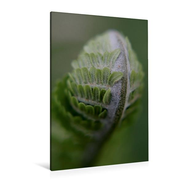 Premium Textil-Leinwand 80 cm x 120 cm  hoch, Farn | Wandbild, Bild auf Keilrahmen, Fertigbild auf echter Leinwand, Leinwanddruck - Coverbild