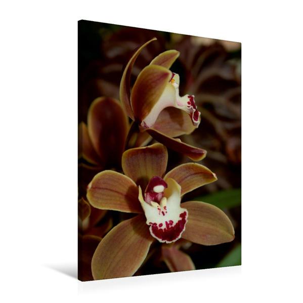Premium Textil-Leinwand 60 cm x 90 cm hoch, Orchidee braun | Wandbild, Bild auf Keilrahmen, Fertigbild auf echter Leinwand, Leinwanddruck - Coverbild