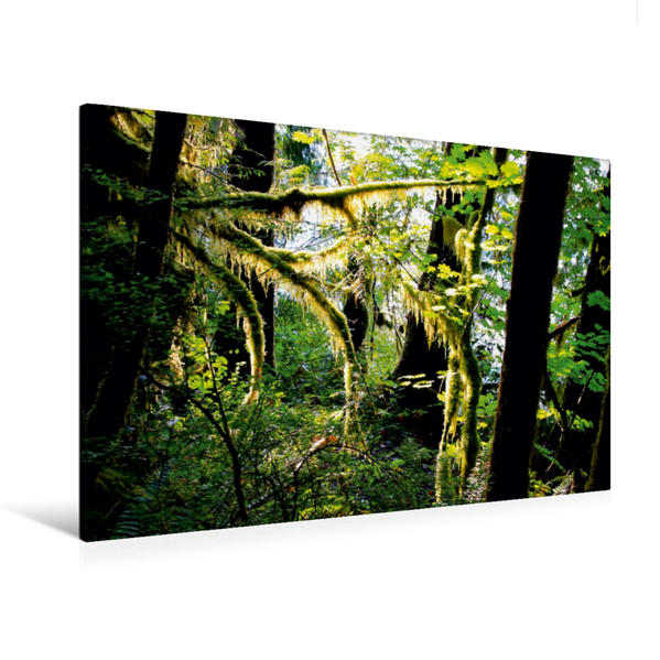 Premium Textil-Leinwand 120 cm x 80 cm quer, Regenwald im Olympic NP, USA | Wandbild, Bild auf Keilrahmen, Fertigbild auf echter Leinwand, Leinwanddruck - Coverbild