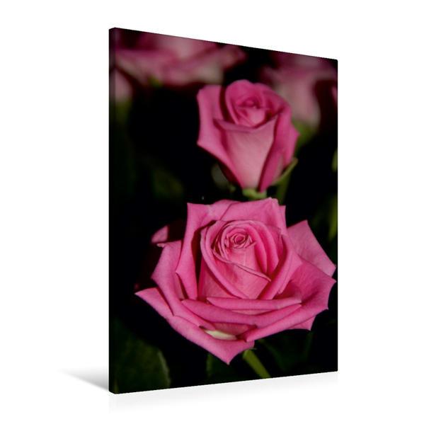 Premium Textil-Leinwand 60 cm x 90 cm hoch, Ein Motiv aus dem Kalender Zauberhafte Rosen | Wandbild, Bild auf Keilrahmen, Fertigbild auf echter Leinwand, Leinwanddruck - Coverbild