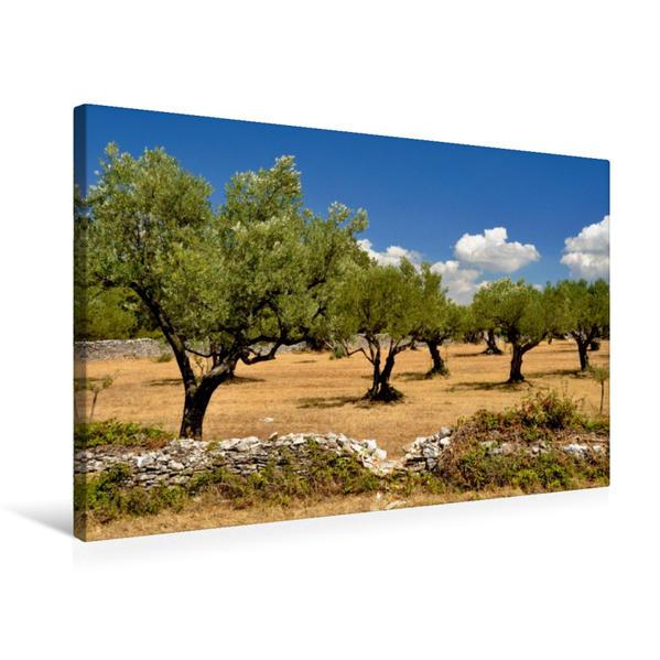 Premium Textil-Leinwand 75 cm x 50 cm quer, Olivenhain   Wandbild, Bild auf Keilrahmen, Fertigbild auf echter Leinwand, Leinwanddruck - Coverbild