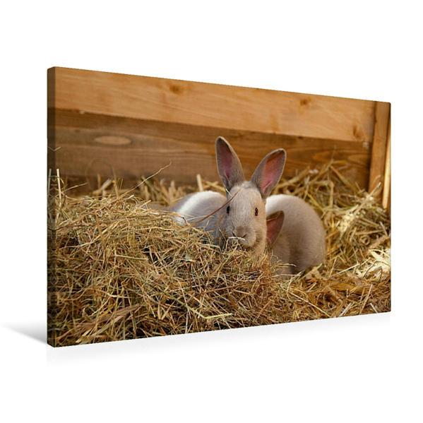 Premium Textil-Leinwand 75 cm x 50 cm quer, Niedliche Kaninchenkinder | Wandbild, Bild auf Keilrahmen, Fertigbild auf echter Leinwand, Leinwanddruck - Coverbild