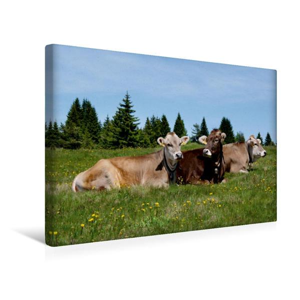 Premium Textil-Leinwand 45 cm x 30 cm quer, Dreierpack auf der Bergwiese | Wandbild, Bild auf Keilrahmen, Fertigbild auf echter Leinwand, Leinwanddruck - Coverbild