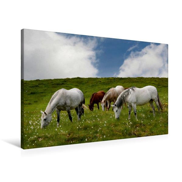 Premium Textil-Leinwand 90 cm x 60 cm quer, Ein Motiv aus dem Kalender Pferde - Hobby und Leidenschaft | Wandbild, Bild auf Keilrahmen, Fertigbild auf echter Leinwand, Leinwanddruck - Coverbild