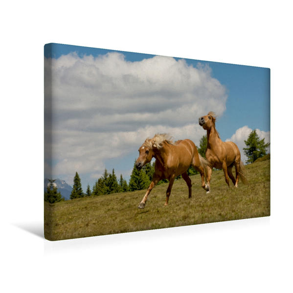 Premium Textil-Leinwand 45 cm x 30 cm quer, Ein Motiv aus dem Kalender Pferde - In natürlicher Umgebung | Wandbild, Bild auf Keilrahmen, Fertigbild auf echter Leinwand, Leinwanddruck - Coverbild