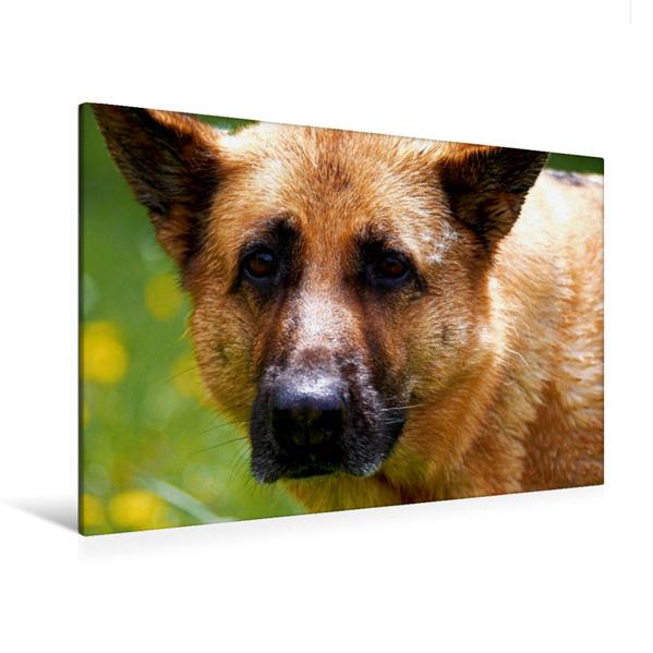 Premium Textil-Leinwand 120 cm x 80 cm quer, Liebeserklärung an den Schäferhund   Wandbild, Bild auf Keilrahmen, Fertigbild auf echter Leinwand, Leinwanddruck - Coverbild