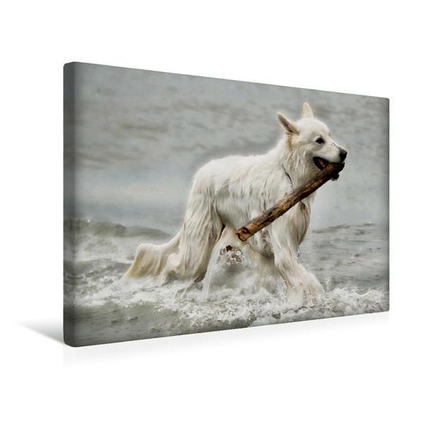 Premium Textil-Leinwand 45 cm x 30 cm quer, Wasser und ein Stock, so kann ein Hund im Himmel sein... | Wandbild, Bild auf Keilrahmen, Fertigbild auf echter Leinwand, Leinwanddruck - Coverbild