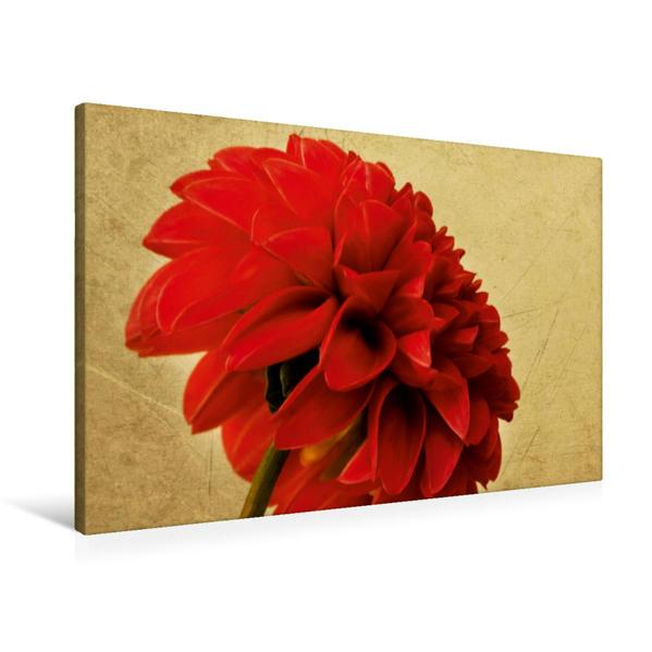 Premium Textil-Leinwand 90 cm x 60 cm quer, Pomon-Dahlie in Rot | Wandbild, Bild auf Keilrahmen, Fertigbild auf echter Leinwand, Leinwanddruck - Coverbild