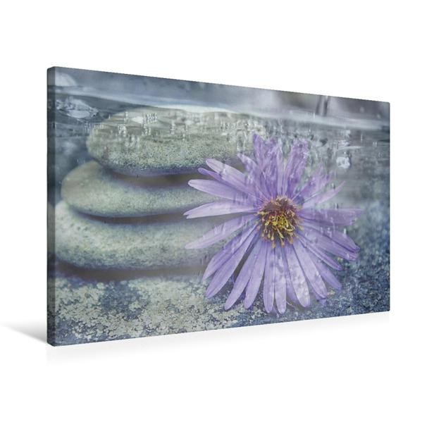 Premium Textil-Leinwand 75 cm x 50 cm quer, Steine mit Margerite | Wandbild, Bild auf Keilrahmen, Fertigbild auf echter Leinwand, Leinwanddruck - Coverbild