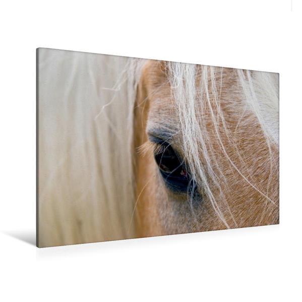 Premium Textil-Leinwand 120 cm x 80 cm quer, Haflingerportrait | Wandbild, Bild auf Keilrahmen, Fertigbild auf echter Leinwand, Leinwanddruck - Coverbild