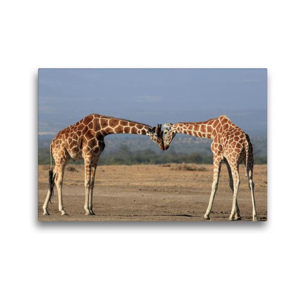 Premium Textil-Leinwand 45 cm x 30 cm quer, Giraffen – Begegnung am Morgen | Wandbild, Bild auf Keilrahmen, Fertigbild auf echter Leinwand, Leinwanddruck - Coverbild