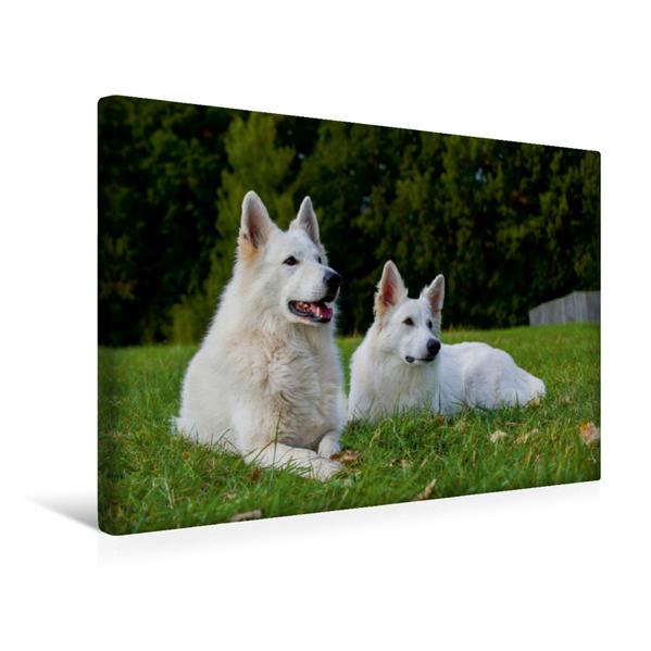 Premium Textil-Leinwand 45 cm x 30 cm quer, Ein Motiv aus dem Kalender Weißer Schweizer Schäferhund | Wandbild, Bild auf Keilrahmen, Fertigbild auf echter Leinwand, Leinwanddruck - Coverbild