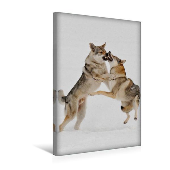 Premium Textil-Leinwand 30 cm x 45 cm hoch, Ein Motiv aus dem Kalender Faszination Wolfhund   Wandbild, Bild auf Keilrahmen, Fertigbild auf echter Leinwand, Leinwanddruck - Coverbild