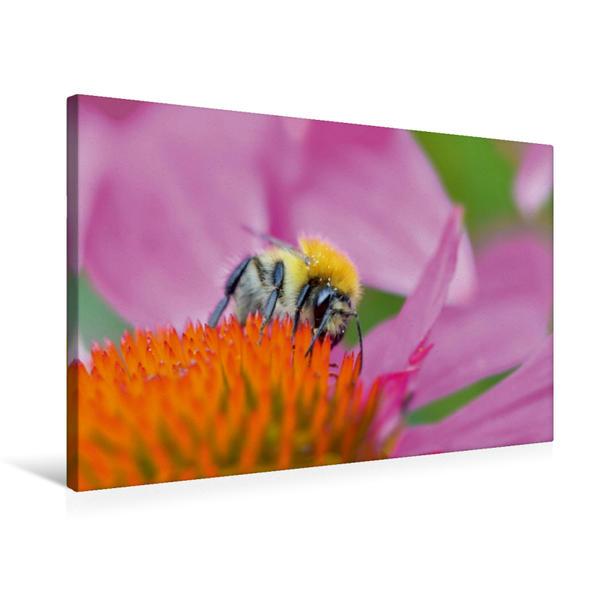 Premium Textil-Leinwand 75 cm x 50 cm quer, Fleißiges Bienchen | Wandbild, Bild auf Keilrahmen, Fertigbild auf echter Leinwand, Leinwanddruck - Coverbild