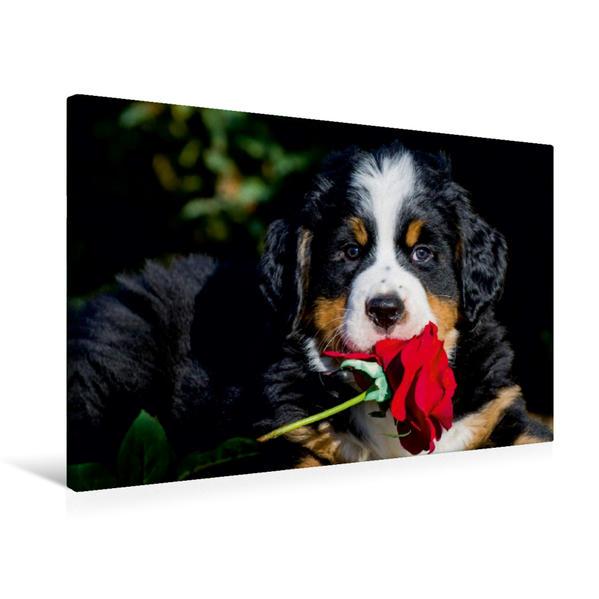Premium Textil-Leinwand 75 cm x 50 cm quer, Ein Motiv aus dem Kalender Geburtstage meiner Lieben - Welpenkalender | Wandbild, Bild auf Keilrahmen, Fertigbild auf echter Leinwand, Leinwanddruck - Coverbild