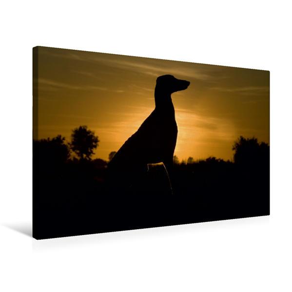 Premium Textil-Leinwand 75 cm x 50 cm quer, Ein Motiv aus dem Kalender Windhund der Wüste - Der Azawakh | Wandbild, Bild auf Keilrahmen, Fertigbild auf echter Leinwand, Leinwanddruck - Coverbild