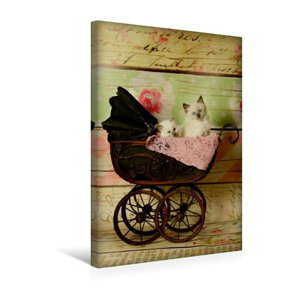 Premium Textil-Leinwand 30 cm x 45 cm hoch, Ein Motiv aus dem Kalender Liebe auf den ersten Blick . Ragdoll Kitten | Wandbild, Bild auf Keilrahmen, Fertigbild auf echter Leinwand, Leinwanddruck - Coverbild