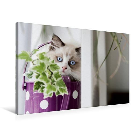 Premium Textil-Leinwand 75 cm x 50 cm quer, Es grünt so Grün ... | Wandbild, Bild auf Keilrahmen, Fertigbild auf echter Leinwand, Leinwanddruck - Coverbild