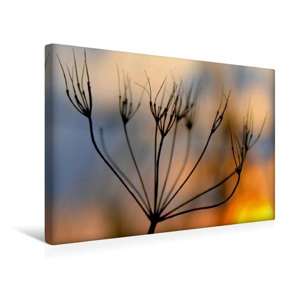 Premium Textil-Leinwand 45 cm x 30 cm quer, Ein Motiv aus dem Kalender Sonnenaufgang im Teufelsmoor | Wandbild, Bild auf Keilrahmen, Fertigbild auf echter Leinwand, Leinwanddruck - Coverbild