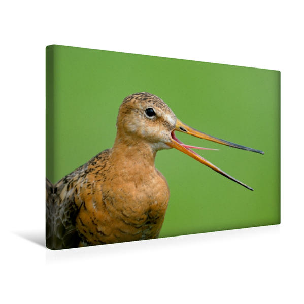 Premium Textil-Leinwand 45 cm x 30 cm quer, Unsere Wiesenvögel - Bezaubernde Schönheiten | Wandbild, Bild auf Keilrahmen, Fertigbild auf echter Leinwand, Leinwanddruck - Coverbild