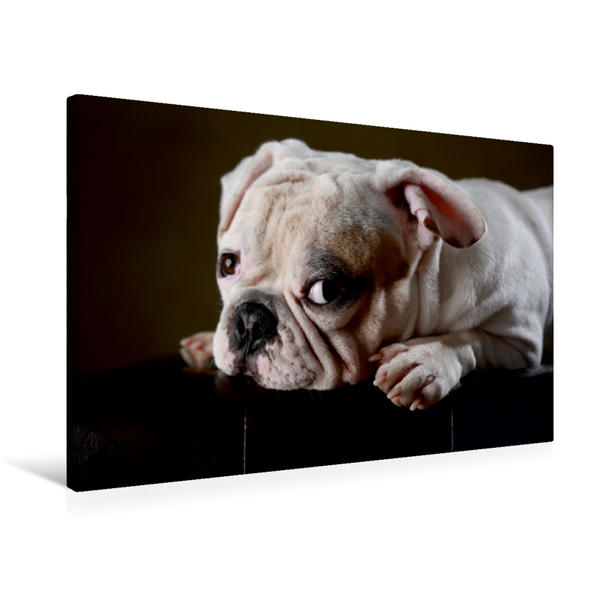 Premium Textil-Leinwand 75 cm x 50 cm quer, Olaf, 1 Jahr | Wandbild, Bild auf Keilrahmen, Fertigbild auf echter Leinwand, Leinwanddruck - Coverbild