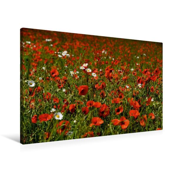 Premium Textil-Leinwand 90 cm x 60 cm quer, Ein Motiv aus dem Kalender Roter Mohn, bunte Wiesen | Wandbild, Bild auf Keilrahmen, Fertigbild auf echter Leinwand, Leinwanddruck - Coverbild