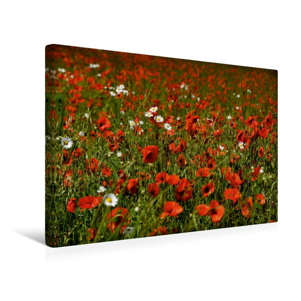 Premium Textil-Leinwand 45 cm x 30 cm quer, Ein Motiv aus dem Kalender Roter Mohn, bunte Wiesen | Wandbild, Bild auf Keilrahmen, Fertigbild auf echter Leinwand, Leinwanddruck - Coverbild