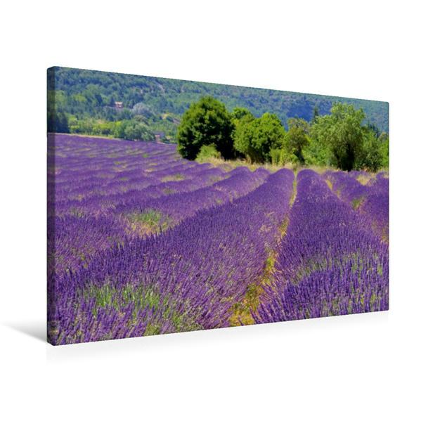 Premium Textil-Leinwand 75 cm x 50 cm quer, Lavendelfeld | Wandbild, Bild auf Keilrahmen, Fertigbild auf echter Leinwand, Leinwanddruck - Coverbild