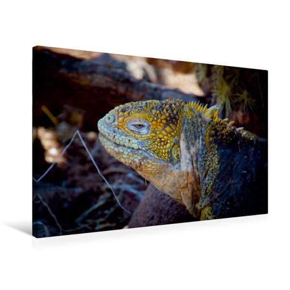 Premium Textil-Leinwand 75 cm x 50 cm quer, Ein Motiv aus dem Kalender Leguane auf Galapagos | Wandbild, Bild auf Keilrahmen, Fertigbild auf echter Leinwand, Leinwanddruck - Coverbild