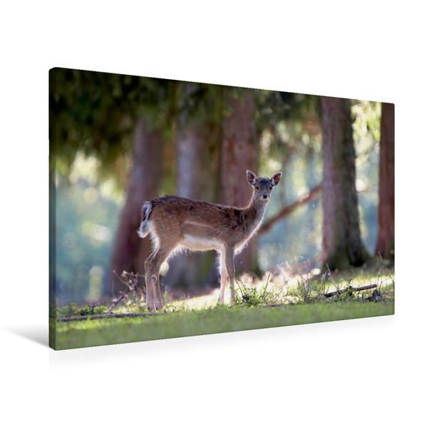 Premium Textil-Leinwand 90 cm x 60 cm quer, Damwild | Wandbild, Bild auf Keilrahmen, Fertigbild auf echter Leinwand, Leinwanddruck - Coverbild