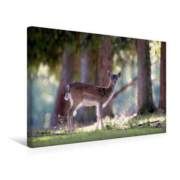 Premium Textil-Leinwand 45 cm x 30 cm quer, Damwild | Wandbild, Bild auf Keilrahmen, Fertigbild auf echter Leinwand, Leinwanddruck - Coverbild