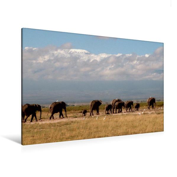Premium Textil-Leinwand 120 cm x 80 cm quer, Auf Wanderung vor dem Kilimadjaro - Elefanten im Amboseli NP - Kenia | Wandbild, Bild auf Keilrahmen, Fertigbild auf echter Leinwand, Leinwanddruck - Coverbild