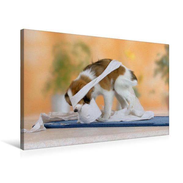 Premium Textil-Leinwand 75 cm x 50 cm quer, Kooikerhondje, Welpe | Wandbild, Bild auf Keilrahmen, Fertigbild auf echter Leinwand, Leinwanddruck - Coverbild