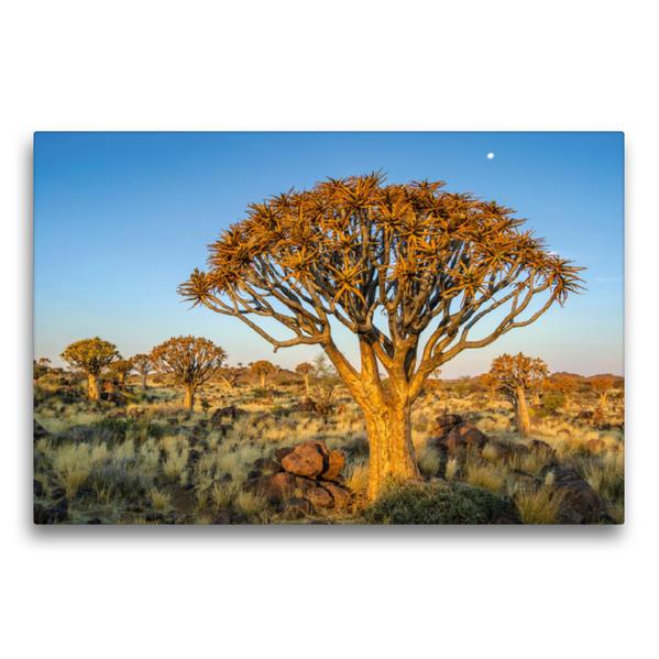 Premium Textil-Leinwand 75 cm x 50 cm quer, Quiver Bäume im Köcherbaumwald bei Keetmanshoop | Wandbild, Bild auf Keilrahmen, Fertigbild auf echter Leinwand, Leinwanddruck - Coverbild