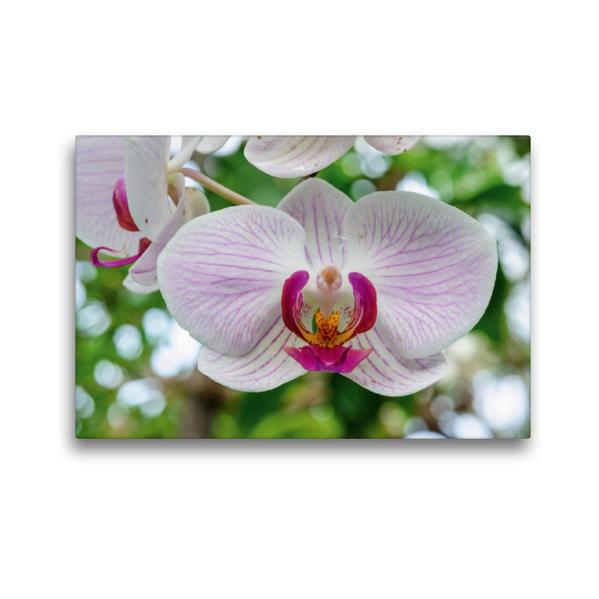 Premium Textil-Leinwand 45 cm x 30 cm quer, Phalaenopsis (Renate Frese) x Manhattan   Wandbild, Bild auf Keilrahmen, Fertigbild auf echter Leinwand, Leinwanddruck - Coverbild