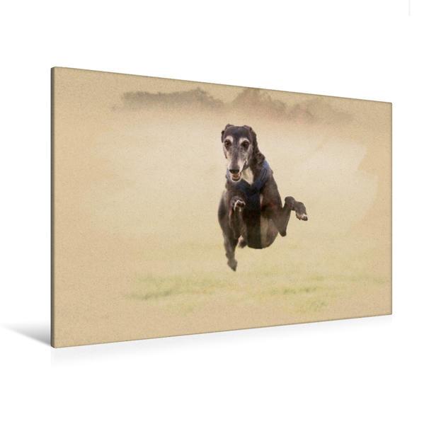 Premium Textil-Leinwand 120 cm x 80 cm quer, Ein Motiv aus dem Kalender Galgo español - Spanische Windhunde in Bewegung | Wandbild, Bild auf Keilrahmen, Fertigbild auf echter Leinwand, Leinwanddruck - Coverbild