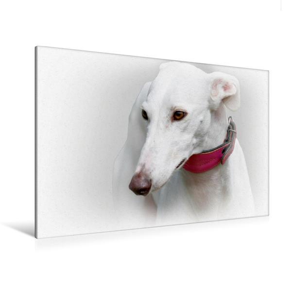 Premium Textil-Leinwand 120 cm x 80 cm quer, Galgo Español (Spanischer Windhund)   Wandbild, Bild auf Keilrahmen, Fertigbild auf echter Leinwand, Leinwanddruck - Coverbild