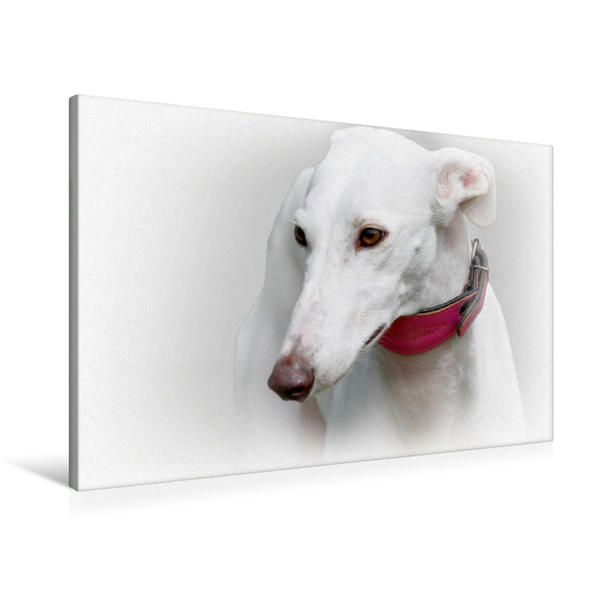 Premium Textil-Leinwand 90 cm x 60 cm quer, Galgo Español (Spanischer Windhund) | Wandbild, Bild auf Keilrahmen, Fertigbild auf echter Leinwand, Leinwanddruck - Coverbild