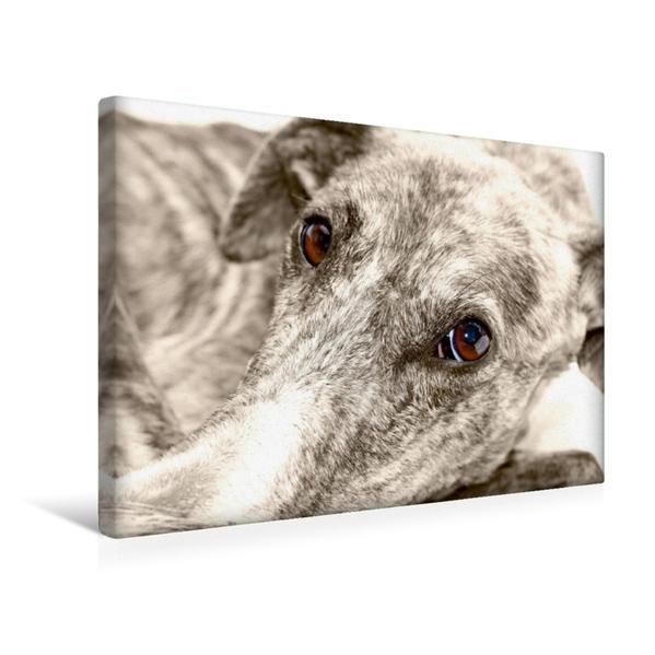 Premium Textil-Leinwand 45 cm x 30 cm quer, Ein Motiv aus dem Kalender Galgo eye-catcher | Wandbild, Bild auf Keilrahmen, Fertigbild auf echter Leinwand, Leinwanddruck - Coverbild
