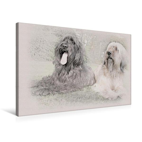 Premium Textil-Leinwand 75 cm x 50 cm quer, Briard | Wandbild, Bild auf Keilrahmen, Fertigbild auf echter Leinwand, Leinwanddruck - Coverbild