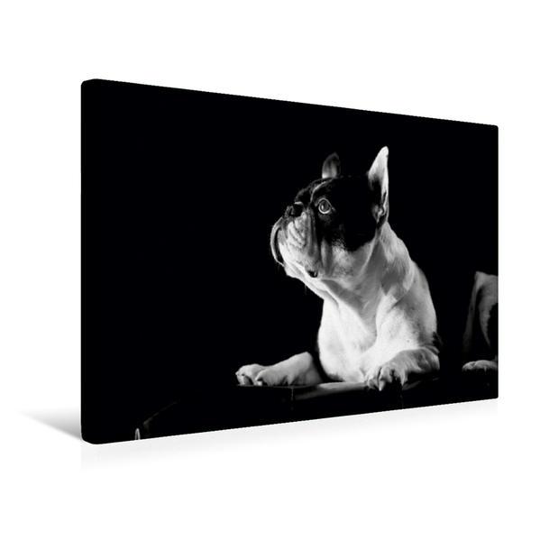 Premium Textil-Leinwand 45 cm x 30 cm quer, Juno - Französische Bulldogge, 4 Jahre | Wandbild, Bild auf Keilrahmen, Fertigbild auf echter Leinwand, Leinwanddruck - Coverbild